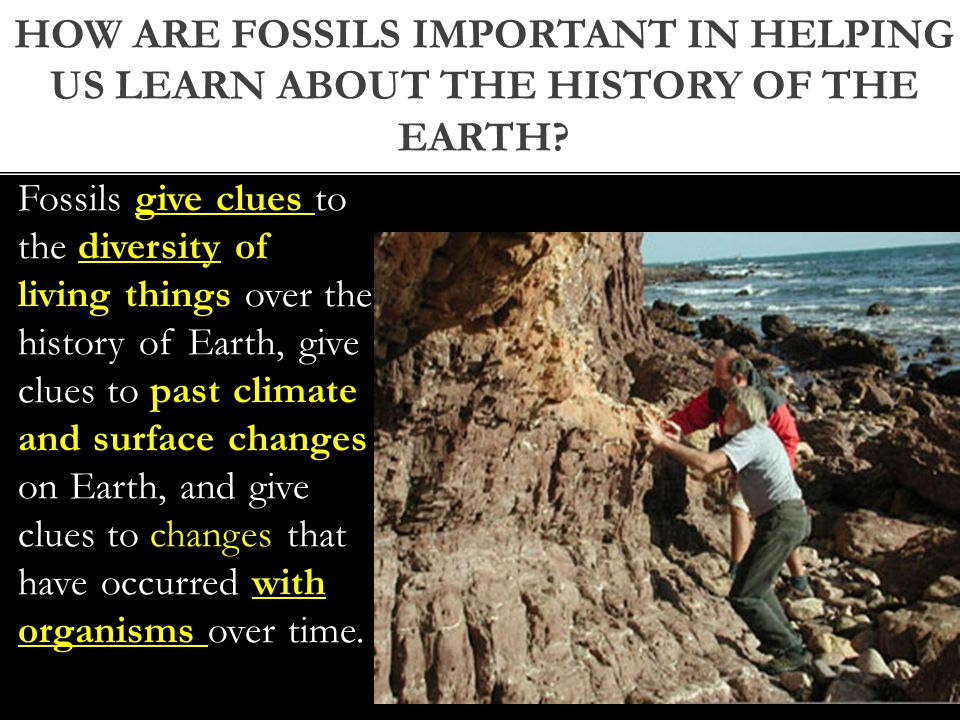 Fossils give clues to the diversity of living things over the history of Earth, give clues to past climate and surface changes on Earth, and give clues to changes that have occurred with organisms over time.