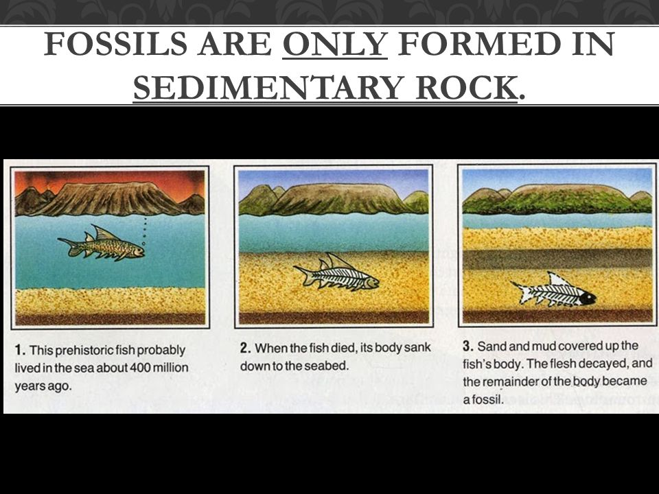 FOSSILS ARE ONLY FORMED IN SEDIMENTARY ROCK.