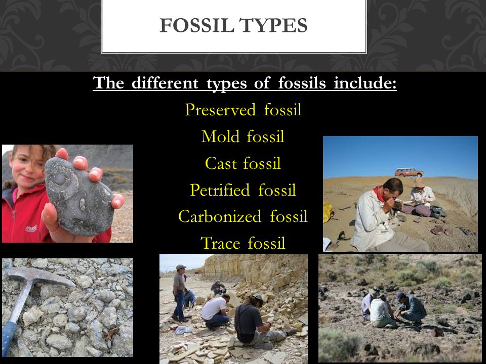 The different types of fossils include: Preserved fossil Mold fossil Cast fossil Petrified fossil Carbonized fossil Trace fossil FOSSIL TYPES