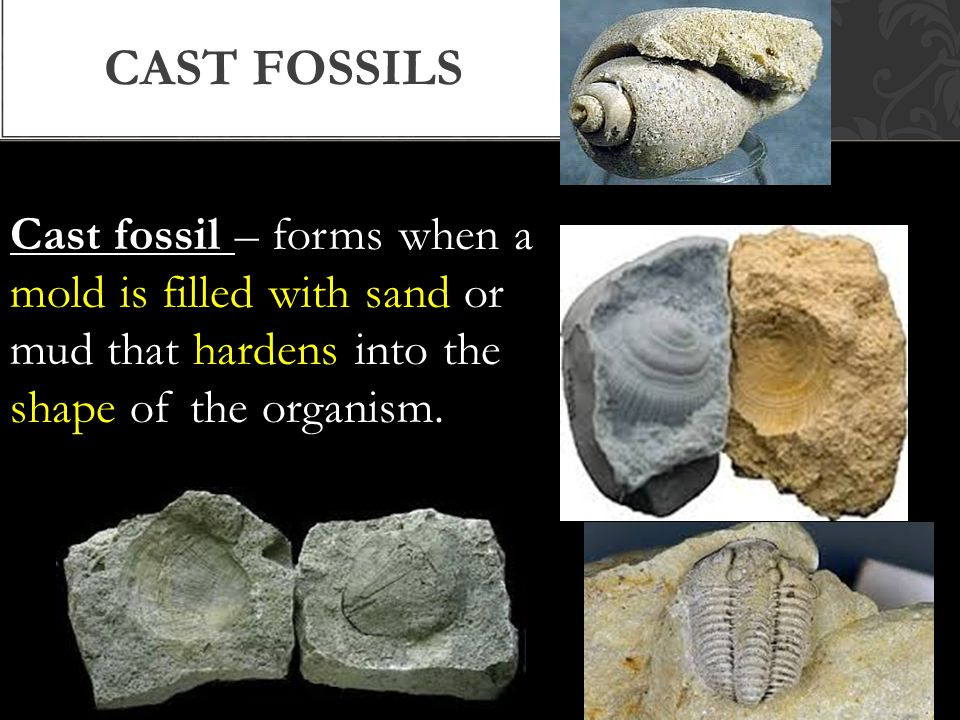 Cast fossil – forms when a mold is filled with sand or mud that hardens into the shape of the organism.