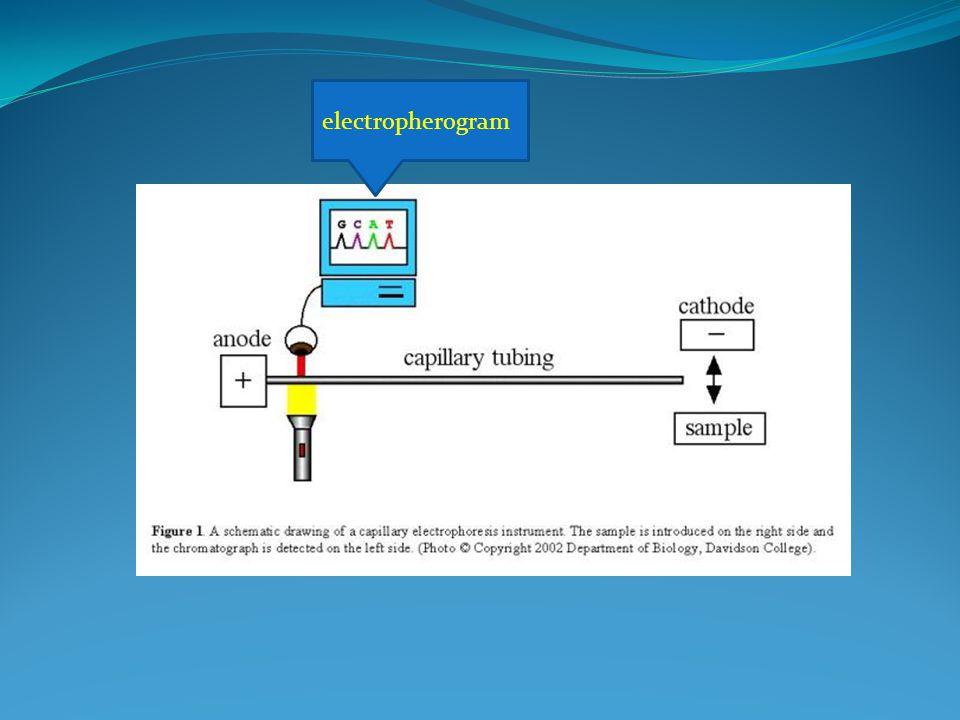 electropherogram