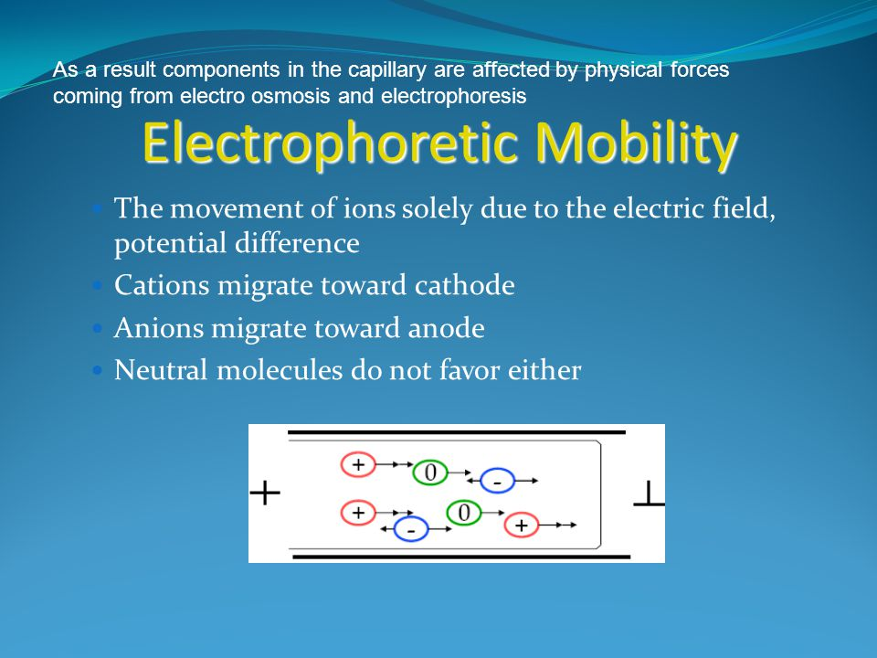 Electrophoretic Mobility v=Eq/f v=Eq/f E electric field strength E electric field strength f v ep = μ ep E μ = q/(6πηr) μ = q/(6πηr) q net ionic charge q net ionic charge η is buffer viscosity r is solute radius Properties that effect mobility 1.