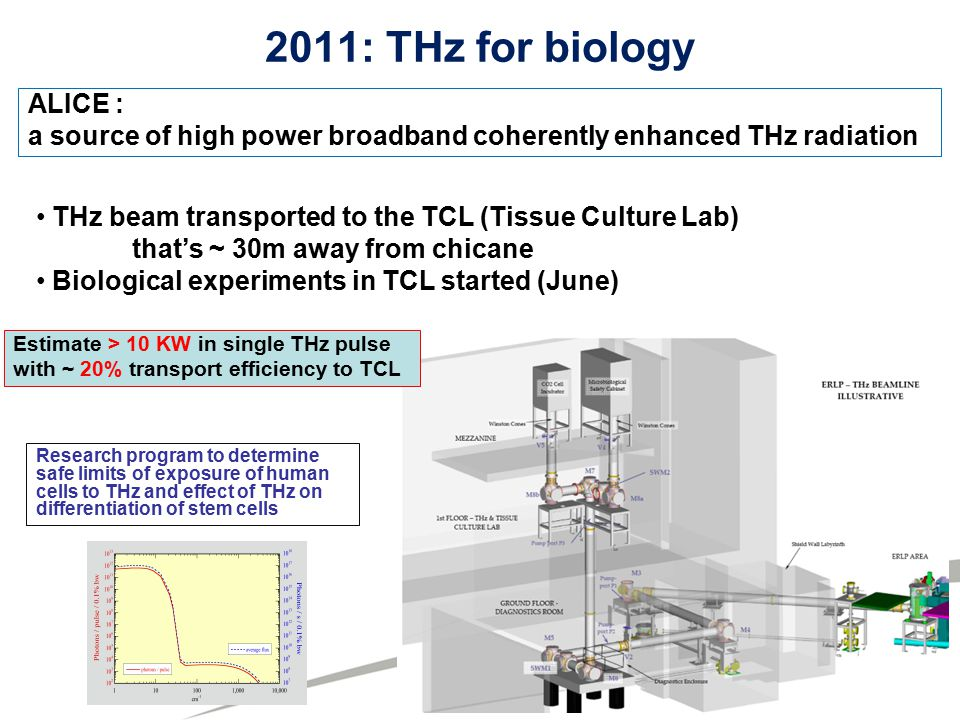 2011: THz for biology THz beam transported to the TCL (Tissue Culture Lab) that's ~ 30m away from chicane Biological experiments in TCL started (June) Research program to determine safe limits of exposure of human cells to THz and effect of THz on differentiation of stem cells Estimate > 10 KW in single THz pulse with ~ 20% transport efficiency to TCL ALICE : a source of high power broadband coherently enhanced THz radiation