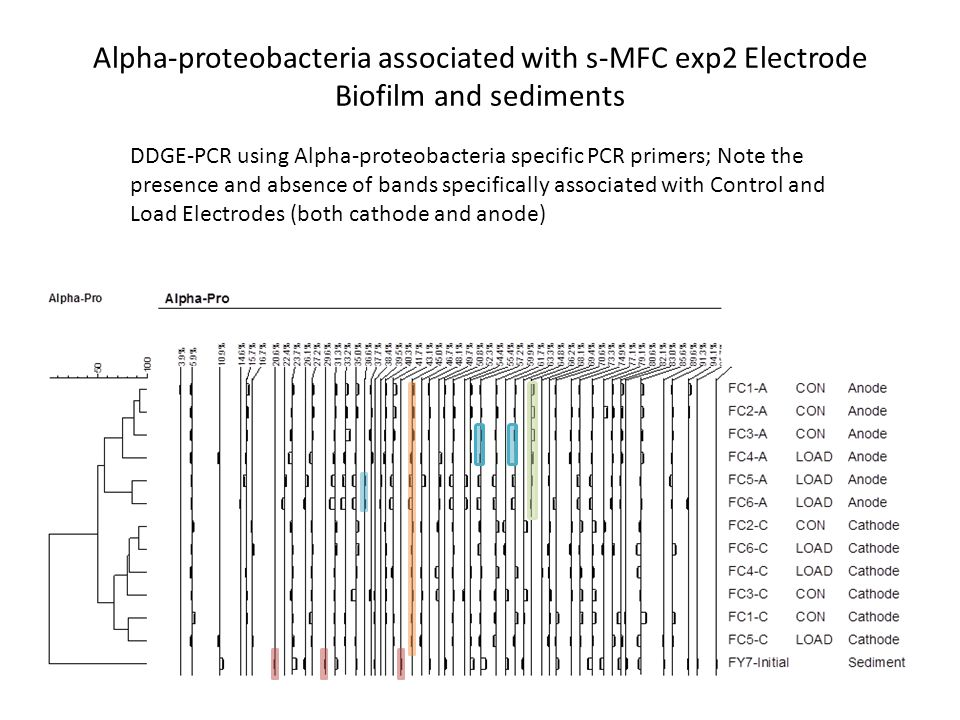 Alpha-proteobacteria associated with s-MFC exp2 Electrode Biofilm and sediments DDGE-PCR using Alpha-proteobacteria specific PCR primers; Note the presence and absence of bands specifically associated with Control and Load Electrodes (both cathode and anode)