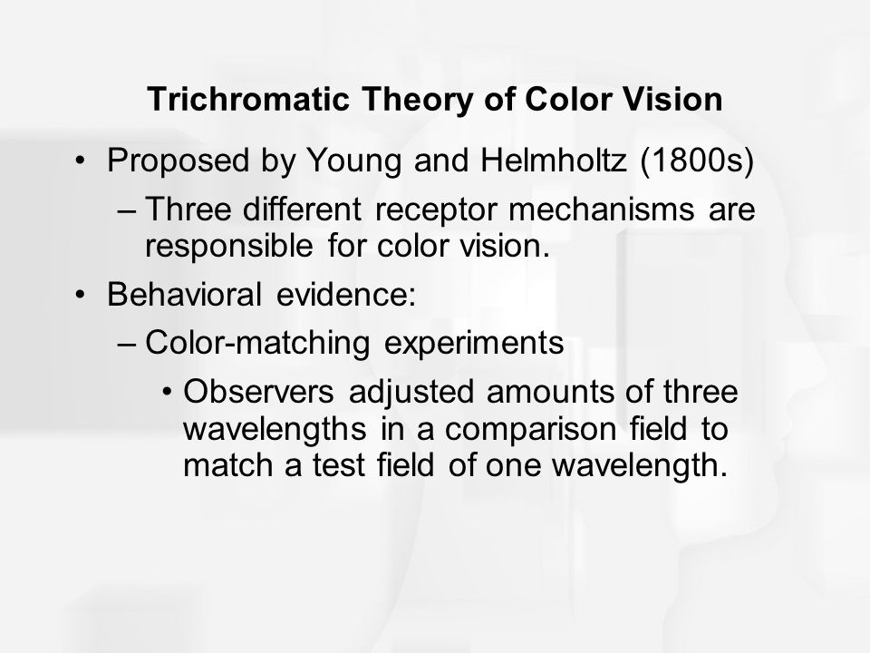 Trichromatic Theory of Color Vision Proposed by Young and Helmholtz (1800s) –Three different receptor mechanisms are responsible for color vision.