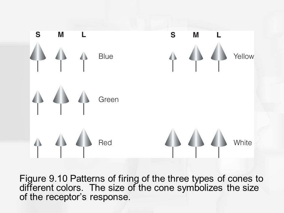 Figure 9.10 Patterns of firing of the three types of cones to different colors.
