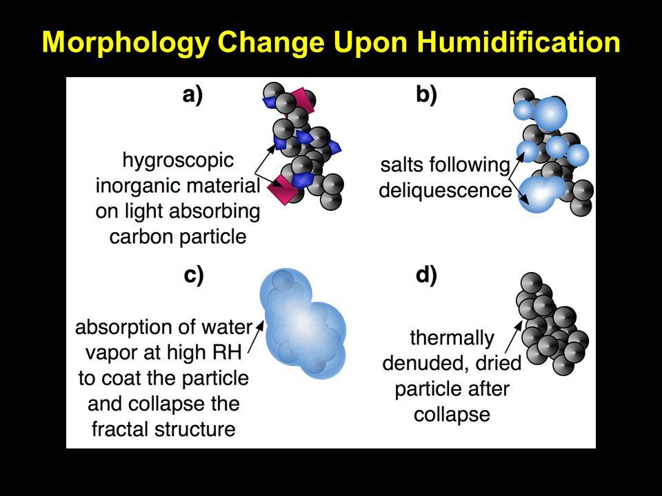 Morphology Change Upon Humidification