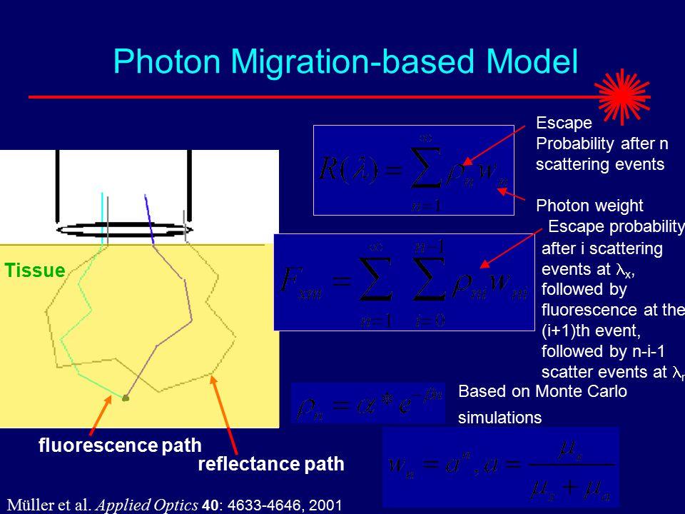 fluorescence path Tissue reflectance path Photon Migration-based Model Müller et al.