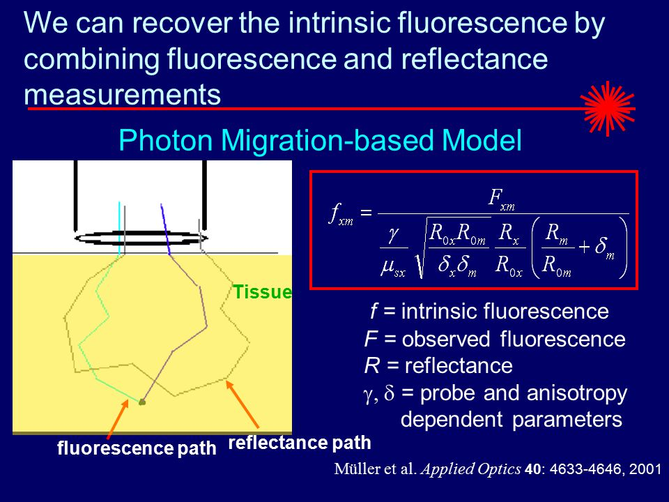 We can recover the intrinsic fluorescence by combining fluorescence and reflectance measurements fluorescence path Tissue reflectance path Photon Migration-based Model f = intrinsic fluorescence F = observed fluorescence R = reflectance  = probe and anisotropy dependent parameters Müller et al.