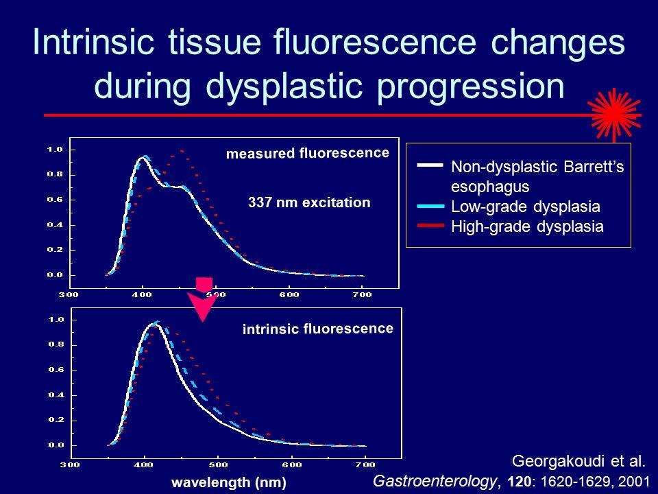 Intrinsic tissue fluorescence changes during dysplastic progression wavelength (nm) measured fluorescence 337 nm excitation Non-dysplastic Barrett's esophagus Low-grade dysplasia High-grade dysplasia intrinsic fluorescence Georgakoudi et al.