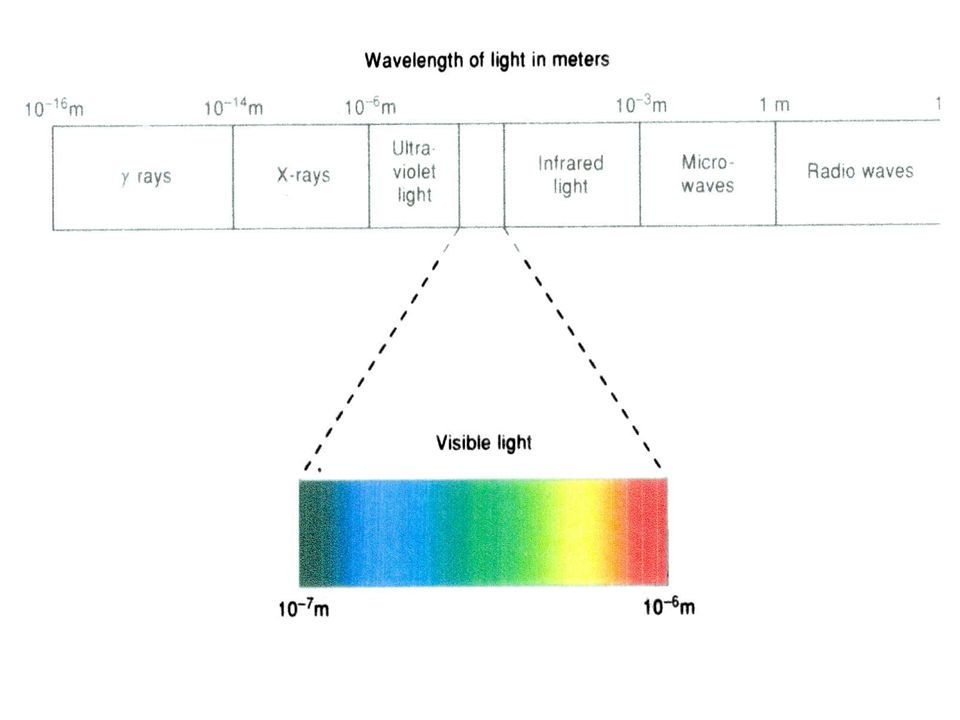 WAVELENGTH OF VISIBLE LIGHT AND COLOR WAVELENGTHCOLOR PERCEIVED 380-430Violet 430-475Blue 475-495Greenish Blue 495-505Bluish Green 505-555Green 555-575Yellowish Green 575-600Yellow 600-650Orange 650-780Red