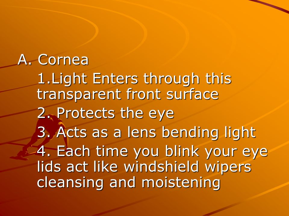 A. Cornea 1.Light Enters through this transparent front surface 2. Protects the eye 3. Acts as a lens bending light 4. Each time you blink your eye li