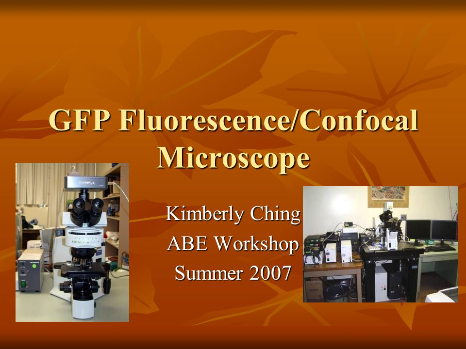 GFP Fluorescence/Confocal Microscope Kimberly Ching ABE Workshop Summer 2007