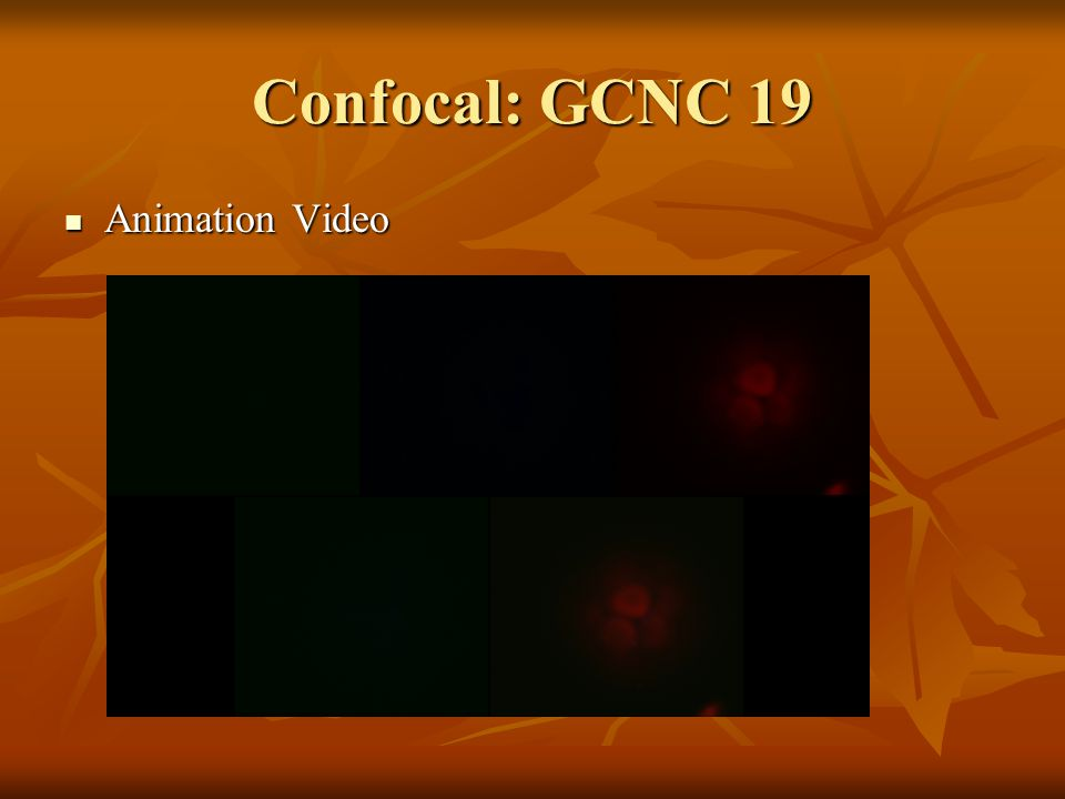 Confocal: GCNC 19 Animation Video Animation Video