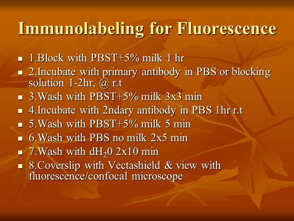 Immunolabeling for Fluorescence 1.Block with PBST+5% milk 1 hr 1.Block with PBST+5% milk 1 hr 2.Incubate with primary antibody in PBS or blocking solution 1-2hr, @ r.t 2.Incubate with primary antibody in PBS or blocking solution 1-2hr, @ r.t 3.Wash with PBST+5% milk 3x3 min 3.Wash with PBST+5% milk 3x3 min 4.Incubate with 2ndary antibody in PBS 1hr r.t 4.Incubate with 2ndary antibody in PBS 1hr r.t 5.Wash with PBST+5% milk 5 min 5.Wash with PBST+5% milk 5 min 6.Wash with PBS no milk 2x5 min 6.Wash with PBS no milk 2x5 min 7.Wash with dH 2 0 2x10 min 7.Wash with dH 2 0 2x10 min 8.Coverslip with Vectashield & view with fluorescence/confocal microscope 8.Coverslip with Vectashield & view with fluorescence/confocal microscope