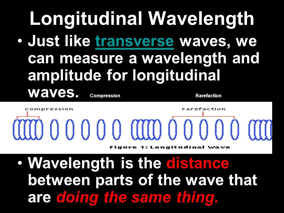Longitudinal Waves Here the oscillations are in the direction of wave motion.