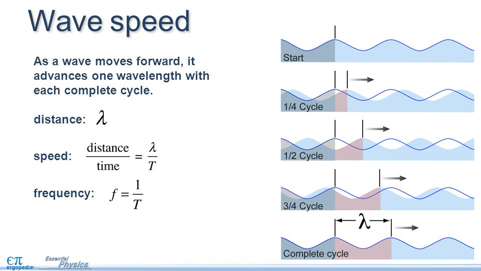 As a wave moves forward, it advances one wavelength with each complete cycle. distance: speed: frequency: Wave speed