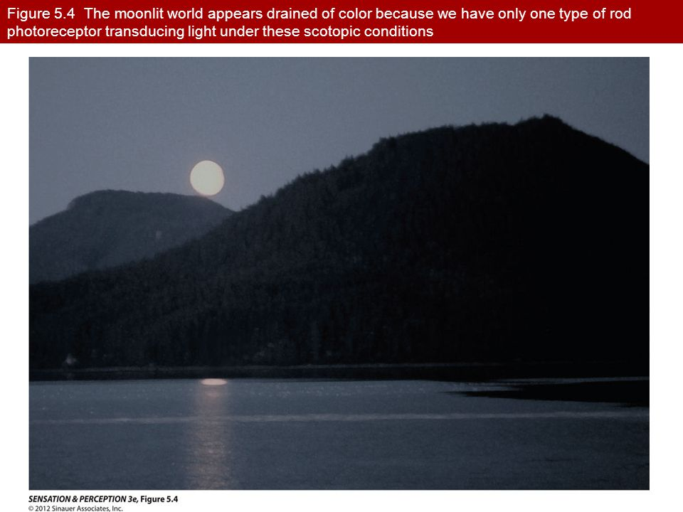 Figure 5.4 The moonlit world appears drained of color because we have only one type of rod photoreceptor transducing light under these scotopic condit