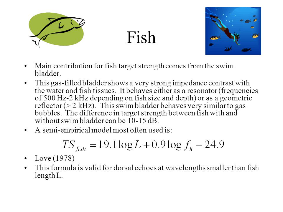 Fish Main contribution for fish target strength comes from the swim bladder.