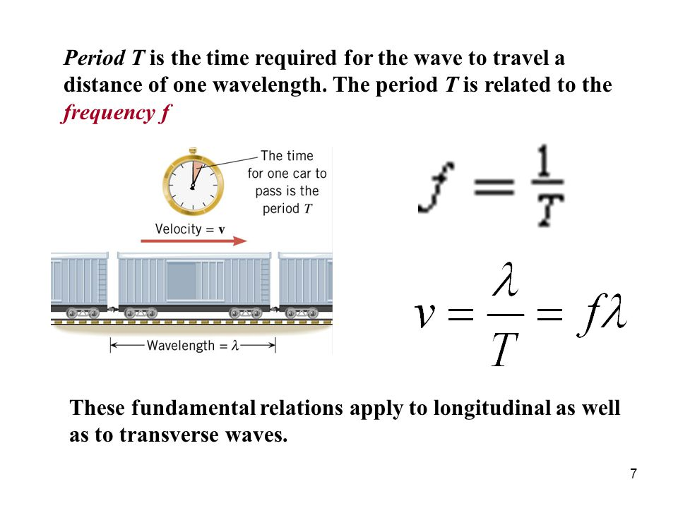 18 Both the wave on the Slinky and the sound wave are longitudinal.