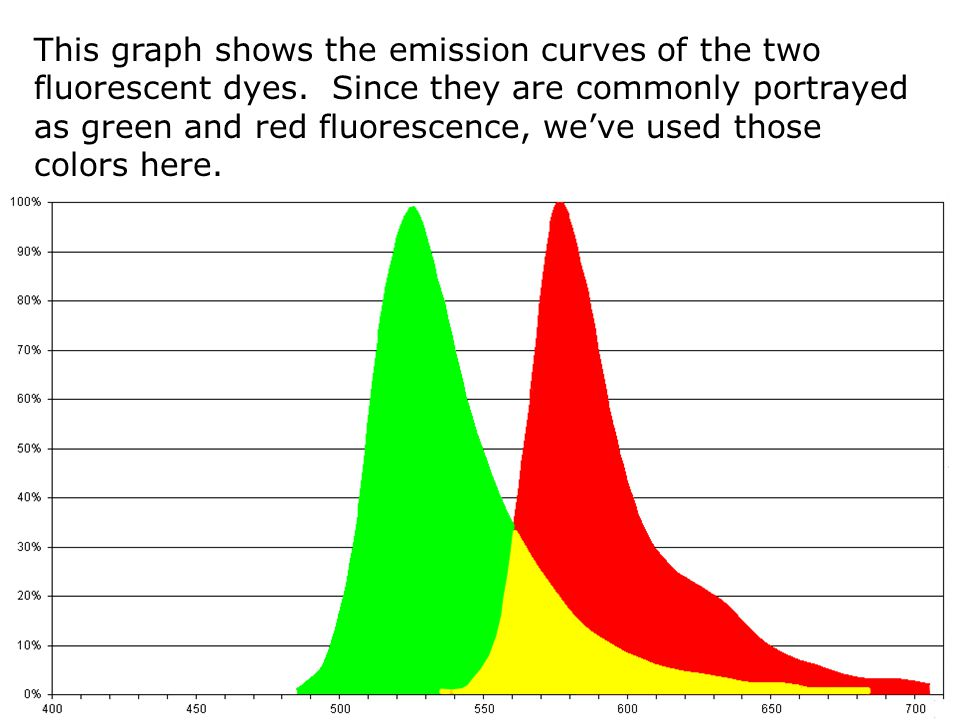 This graph shows the emission curves of the two fluorescent dyes. Since they are commonly portrayed as green and red fluorescence, we've used those co