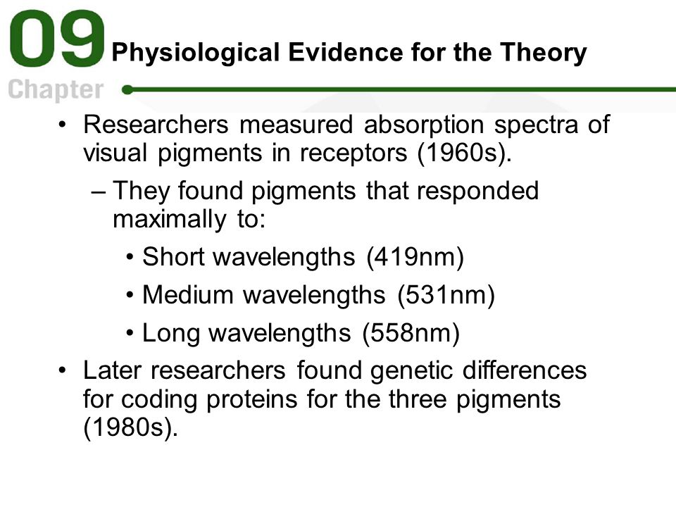 Physiological Evidence for the Theory Researchers measured absorption spectra of visual pigments in receptors (1960s).