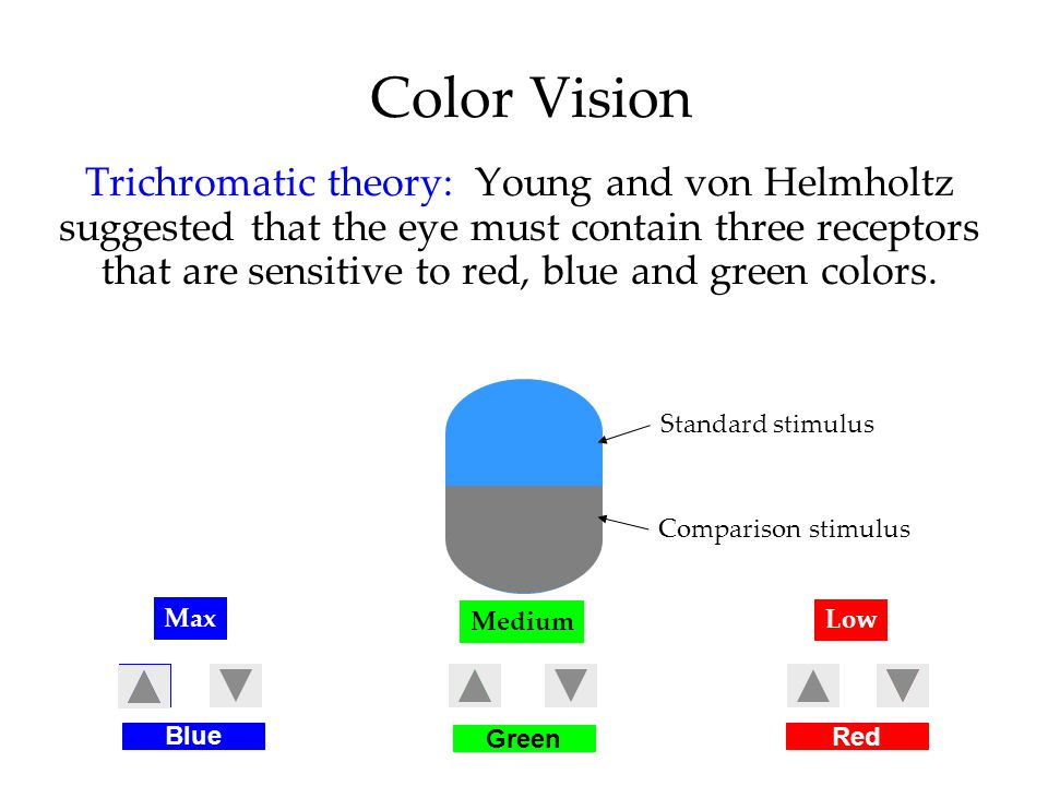 Color Vision Trichromatic theory: Young and von Helmholtz suggested that the eye must contain three receptors that are sensitive to red, blue and green colors.
