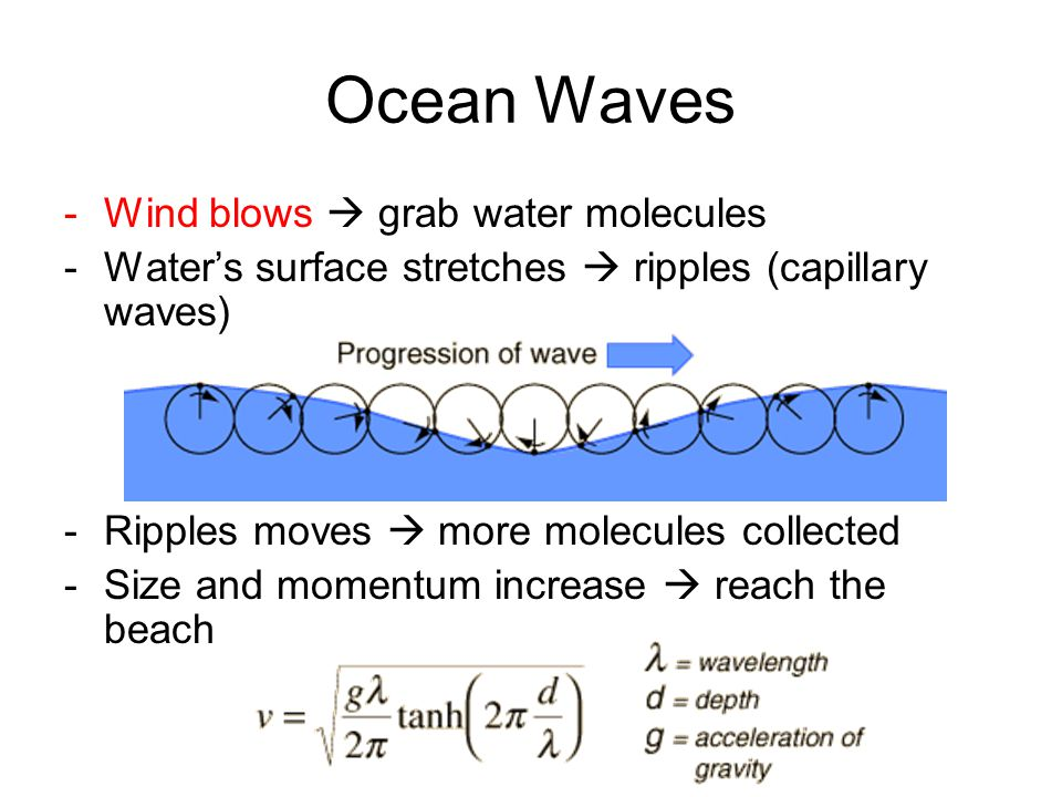 Ocean Waves -Wind blows  grab water molecules -Water's surface stretches  ripples (capillary waves) -Ripples moves  more molecules collected -Size and momentum increase  reach the beach