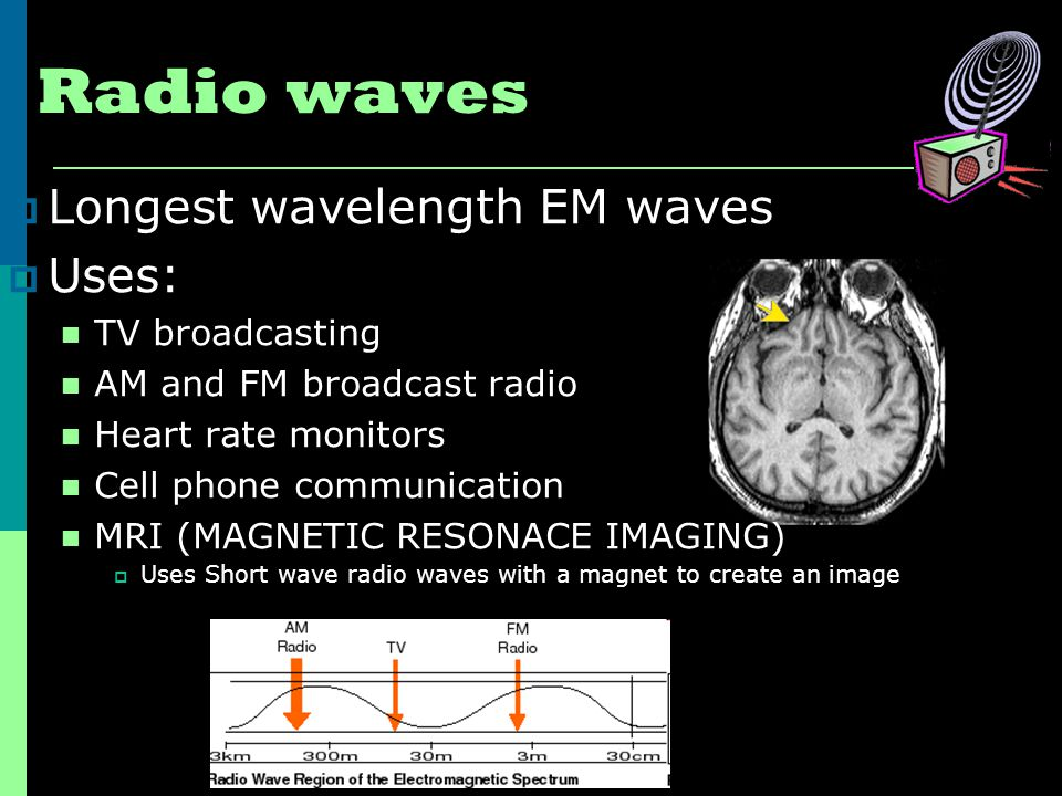 Radio waves  Longest wavelength EM waves  Uses: TV broadcasting AM and FM broadcast radio Heart rate monitors Cell phone communication MRI (MAGNETIC