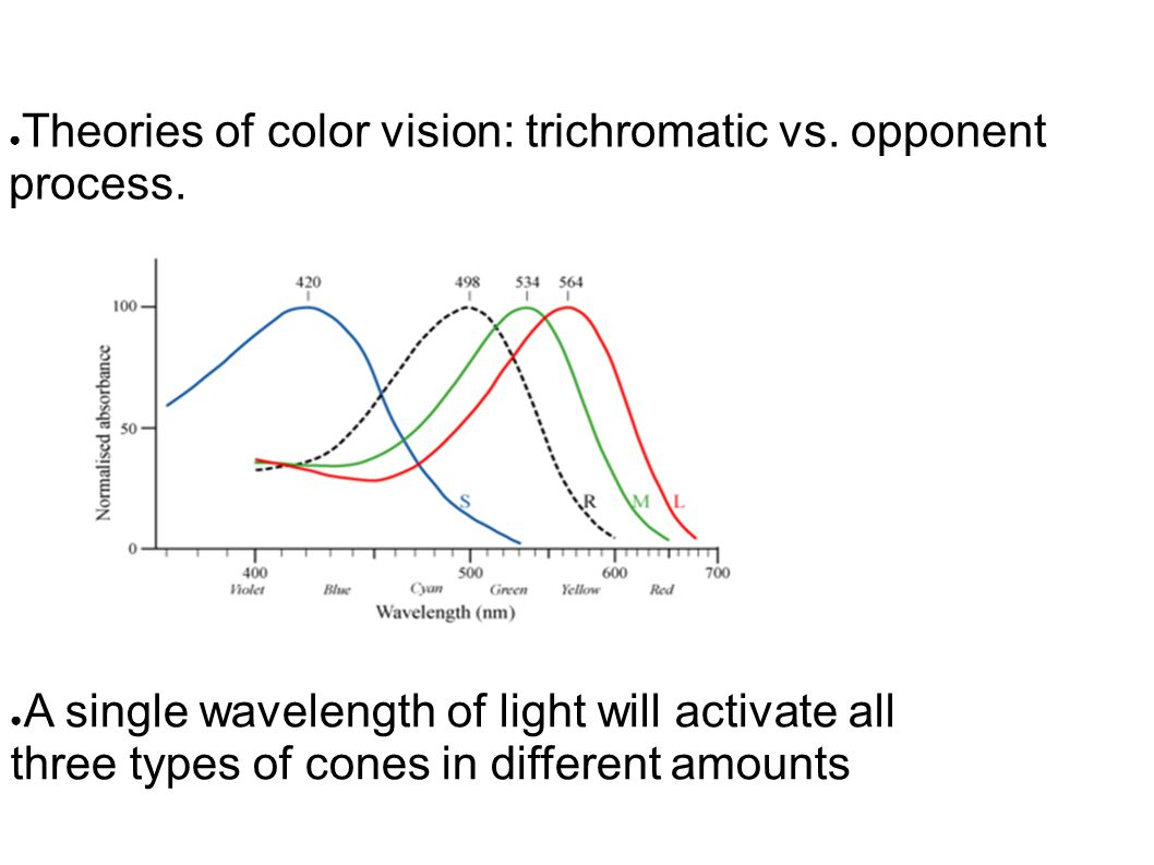 ● Theories of color vision: trichromatic vs. opponent process.