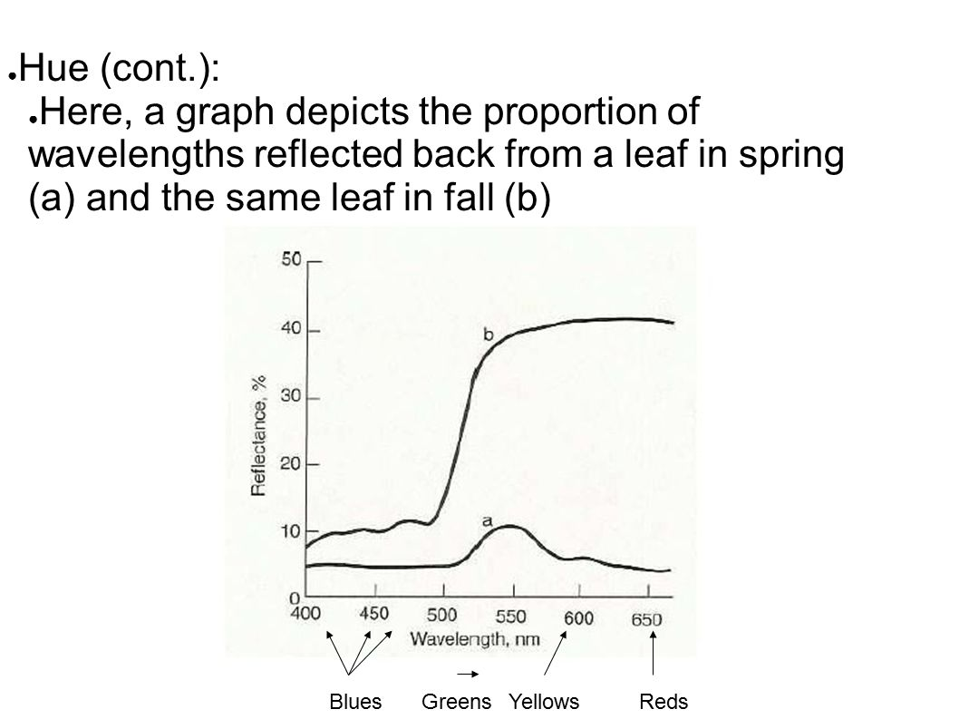 ● Hue (cont.): ● Here, a graph depicts the proportion of wavelengths reflected back from a leaf in spring (a) and the same leaf in fall (b) BluesGreensYellowsReds