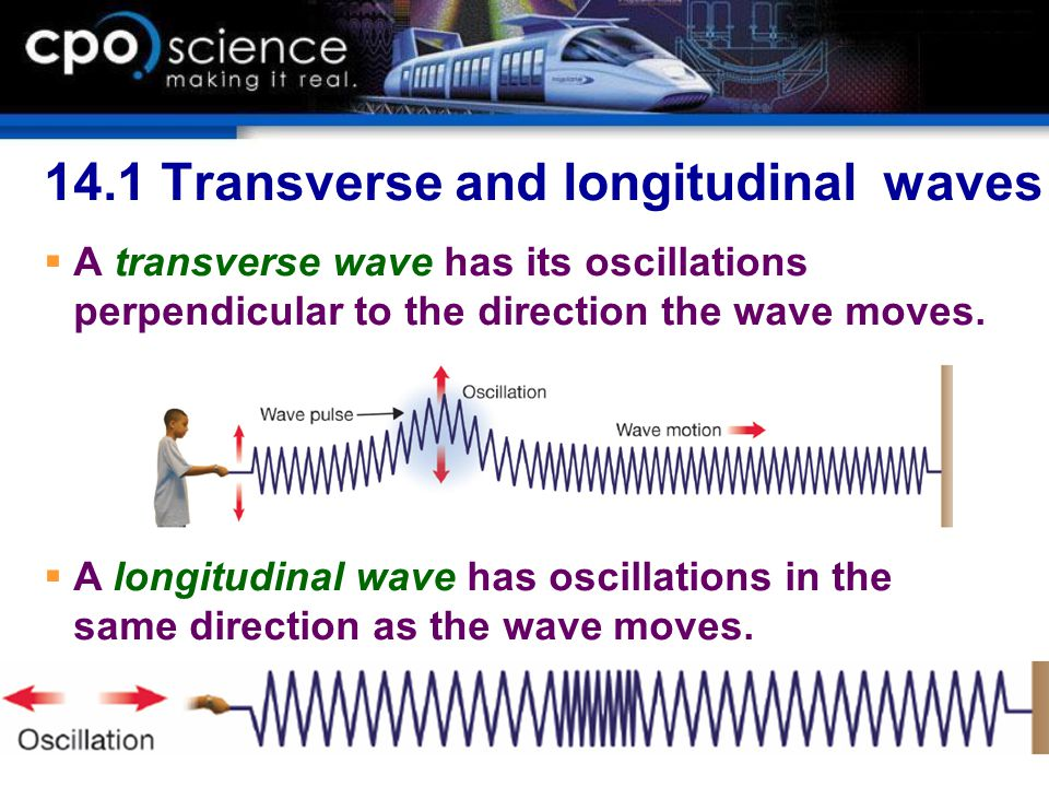 14.1 Transverse and longitudinal waves  A transverse wave has its oscillations perpendicular to the direction the wave moves.  A longitudinal wave h