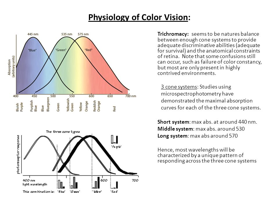 Physiology of Color Vision: Trichromacy: seems to be natures balance between enough cone systems to provide adequate discriminative abilities (adequat
