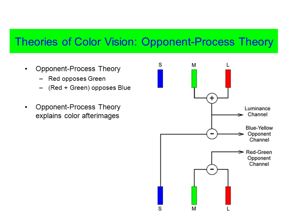 Opponent-Process Theory –Red opposes Green –(Red + Green) opposes Blue Opponent-Process Theory explains color afterimages Theories of Color Vision: Opponent-Process Theory