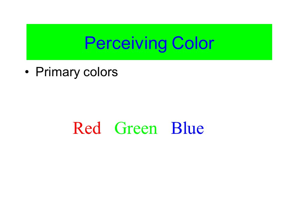 Color Vision Blue Green Red Yellow Equal Parts Red and Green = Wavelength InputCone Signal to Brain Theories of Color Vision: Trichromatic Theory