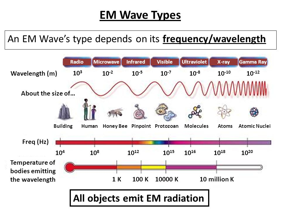 EM Wave Types An EM Wave's type depends on its frequency/wavelength 10 3 10 -2 10 -5 10 -7 10 -8 10 -10 10 -12 Wavelength (m) Freq (Hz) Temperature of bodies emitting the wavelength 1 K100 K10000 K10 million K 10 4 10 8 10 12 10 15 10 16 10 18 10 20 About the size of… Building Human Honey Bee PinpointProtozoanMolecules Atoms Atomic Nuclei RadioMicrowaveInfraredVisibleUltravioletX-rayGamma Ray All objects emit EM radiation