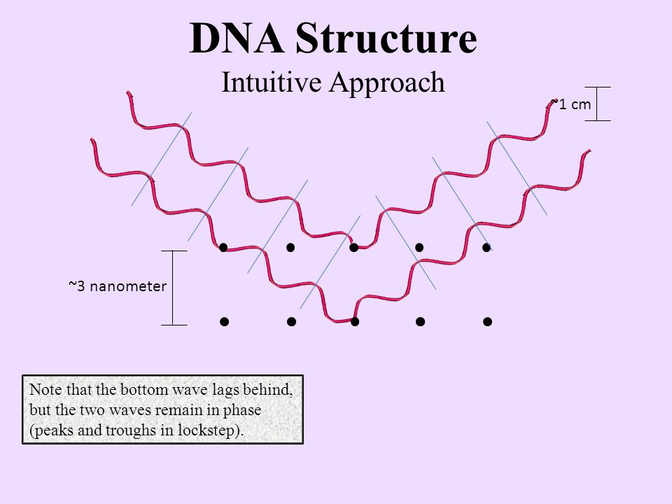 ~1 cm ~3 nanometer DNA Structure Intuitive Approach Since the waves are in phase, their intensities add to each other and a spot is produced on the film.