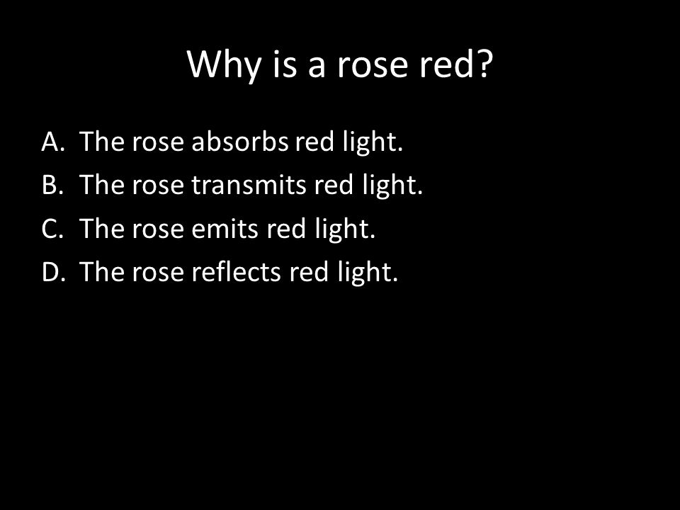 Why is a rose red. A.The rose absorbs red light. B.The rose transmits red light.