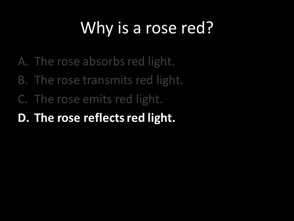 Why is a rose red? A.The rose absorbs red light. B.The rose transmits red light. C.The rose emits red light. D.The rose reflects red light.