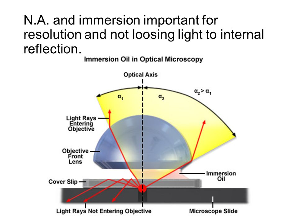 N.A. and immersion important for resolution and not loosing light to internal reflection.