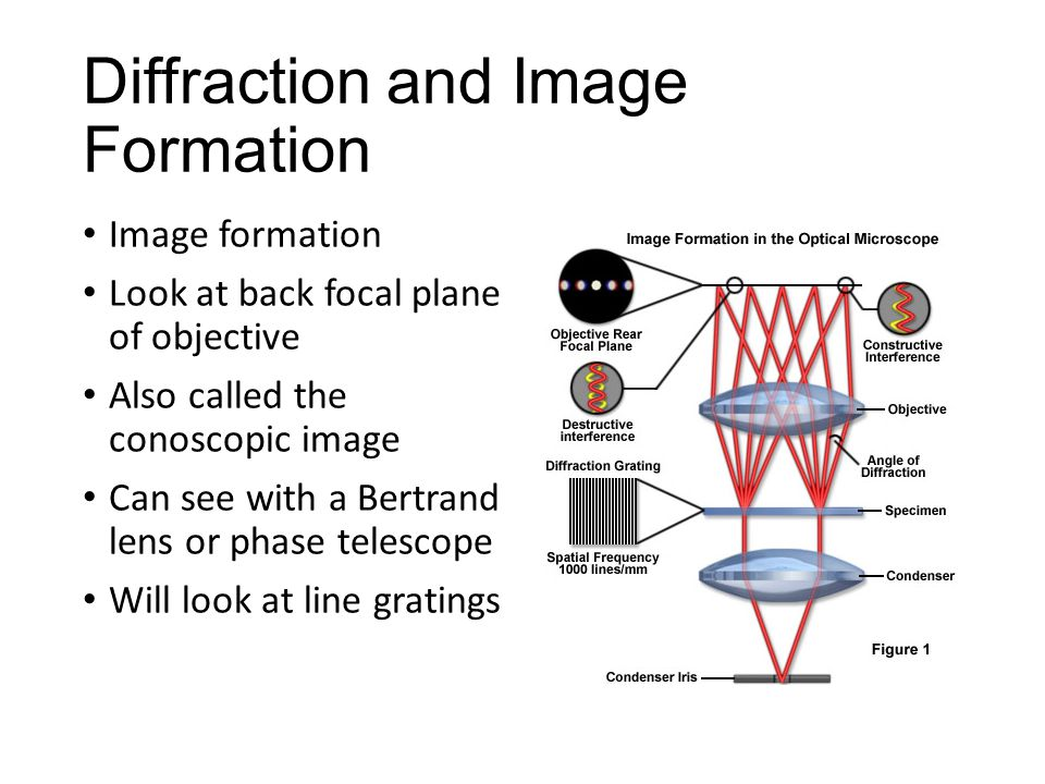 Diffraction and Image Formation Image formation Look at back focal plane of objective Also called the conoscopic image Can see with a Bertrand lens or