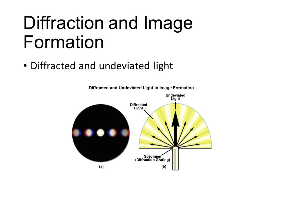Diffraction and Image Formation Diffracted and undeviated light