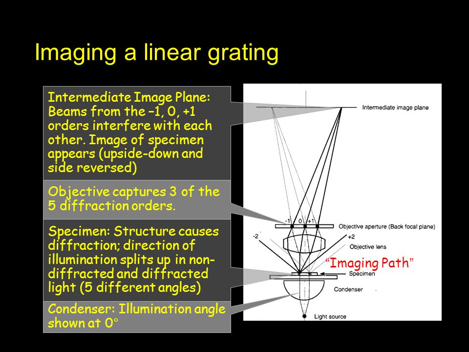 Imaging a linear grating Condenser: Illumination angle shown at 0° Specimen: Structure causes diffraction; direction of illumination splits up in non-