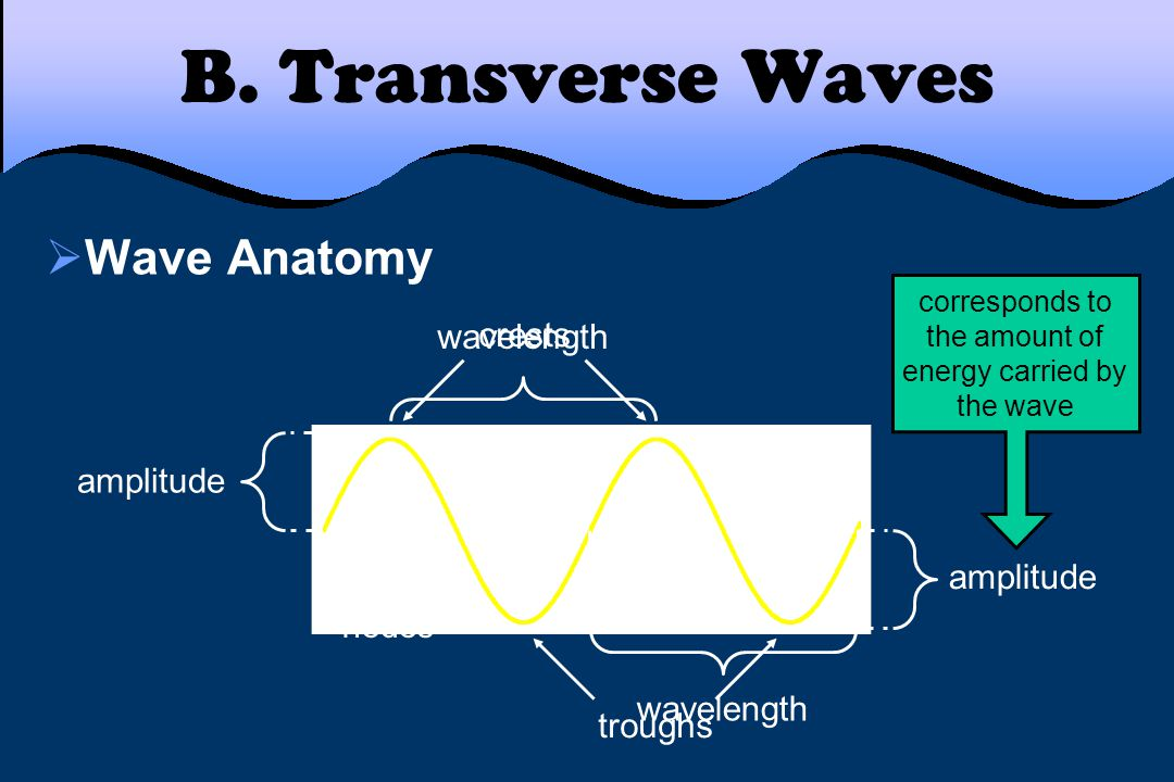 B. Transverse Waves  Wave Anatomy crests troughs wavelength amplitude corresponds to the amount of energy carried by the wave nodes