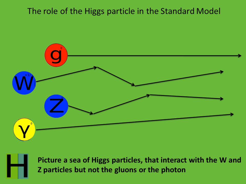 The role of the Higgs particle in the Standard Model Picture a sea of Higgs particles, that interact with the W and Z particles but not the gluons or the photon