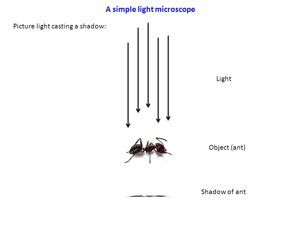 A simple light microscope Picture light casting a shadow: Light Object (ant) Shadow of ant