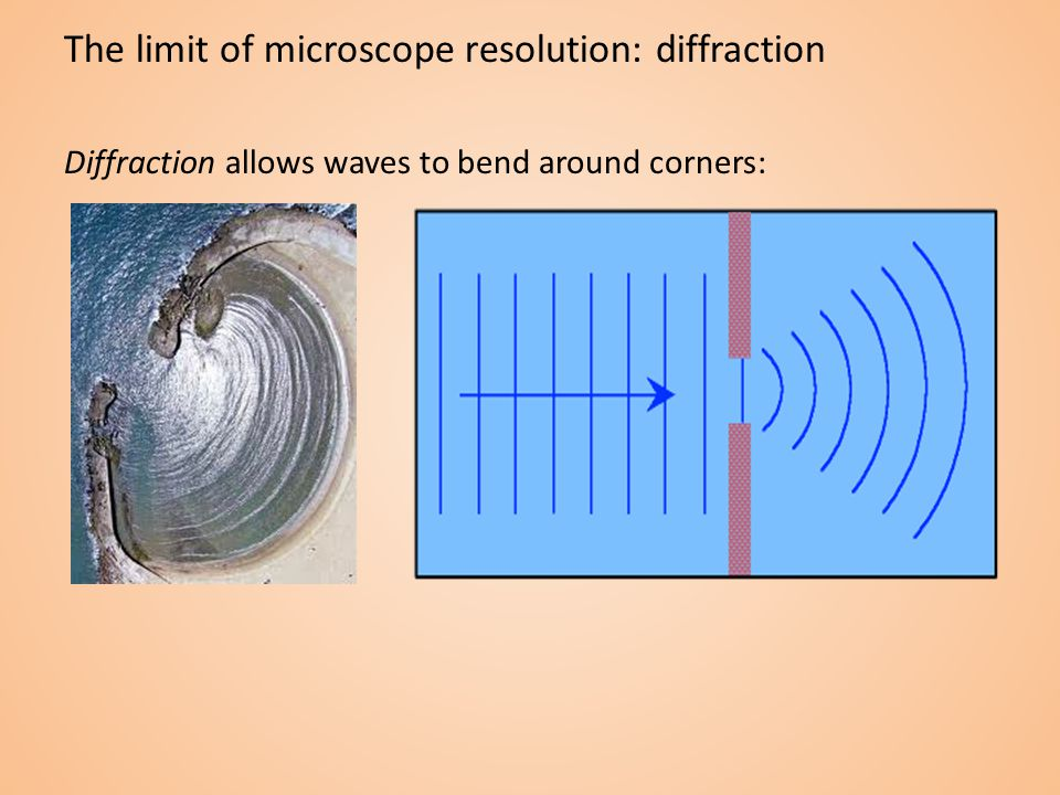 The limit of microscope resolution: diffraction Diffraction allows waves to bend around corners:
