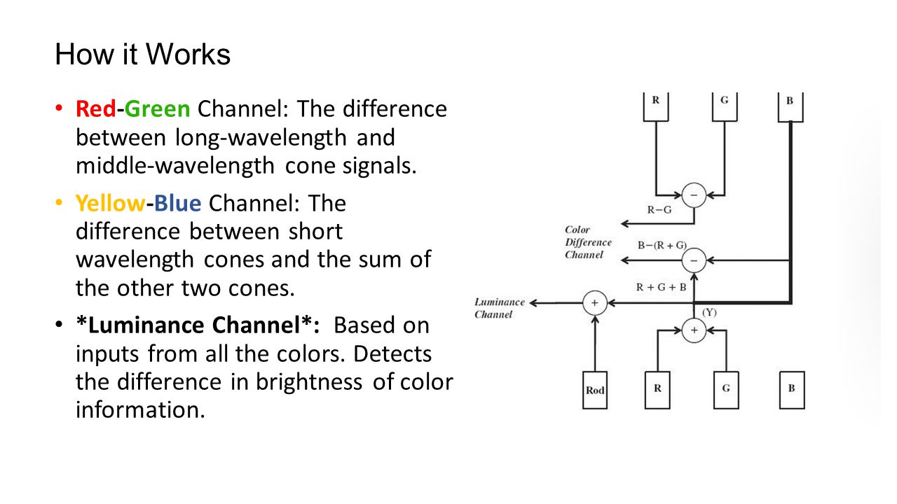 How it Works Red-Green Channel: The difference between long-wavelength and middle-wavelength cone signals.