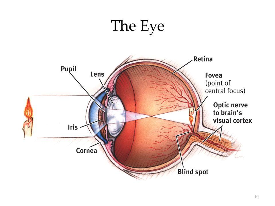 10 The Eye