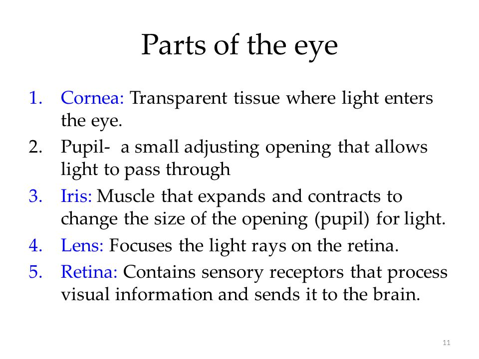 11 Parts of the eye 1.Cornea: Transparent tissue where light enters the eye. 2.Pupil- a small adjusting opening that allows light to pass through 3.Ir